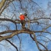 Logo ALL in one tree service