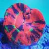 Logo Whitlyn Aquatics LLC. Corals - Fish - Service