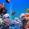 Logo Bill Goody Aquariums - Best Aquarium Service & Maintenance in New York City!