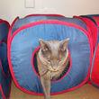 Photo #2: Noahs Ark Animal Clinic