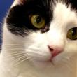Photo #1: Companion Pet Hospital