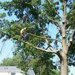 Photo #1: Rodey's Tree Service