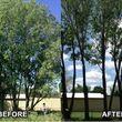 Photo #3: Bladi's Tree Service