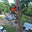 Photo #1: Texas Tree Releaf