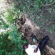 Photo #6: R's Landscaping Tree Service Construction and More