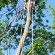 Photo #3: 7 Oaks Tree Service