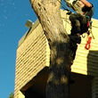 Photo #2: Tree Rigs LLC