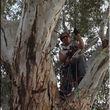 Photo #4: Tree Rigs LLC