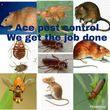 Photo #1: ACE Pest Control
