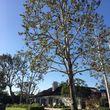Photo #6: Greenfield Tree Service
