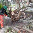 Photo #7: tree service