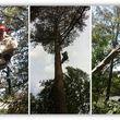 Photo #8: tree service
