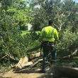 Photo #6: Stump Grinding, Tree Removal, Pruning, Storm Damage Clean-up