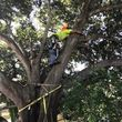 Photo #9: Stump Grinding, Tree Removal, Pruning, Storm Damage Clean-up