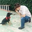 Dog training classes starting soon!!!!!