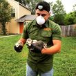 WILDLIFE & RODENT REMOVAL - PEST CONTROL