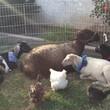 Photo #1: Petting Zoo