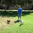 Photo #1: Dog Walker, Experienced, Insured & Bonded