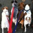 Dog Walking, Daycare, & Boarding Swampscott/Marblehead