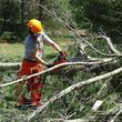 Full-service tree cutting/lowest rates/