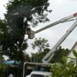 Jess's Tree Service, Tree Triming Removal Maintenance