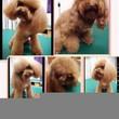 Flip & Cut Pet Grooming