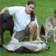 Dog Trainer Specializing in Socialization Training 4 Dogs