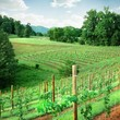 PROFESSIONAL VINEYARD INSTALLATION