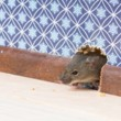 Ridzone Pest Control. Rodent Control Exterminators.