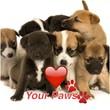 Dog Walking, Pet Sitters, Pooper Scoopers...