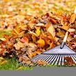 Photo #1: Fall Leaf Cleanups
