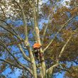 CHEAP TREE SERVICE. BRUSH GRINDING AND REMOVAL