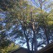 Caleb Tree Removal