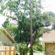 Caleb Tree Removal