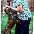Alicia's All N One Animal Care! Dog walking, Pet sitting, Dog grooming