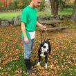 Premium Dog Training services