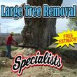 Falls the time to prune your trees! Call us for a free estimate!