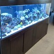 Reef Playground. Aquarium Service Co.