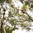 7 Oaks Tree Service