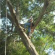 TREE SERVICE. HOME REPAIRS. ALL IN ONE HANDY MAN!