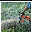 Tree service & land cleaning stump grinder