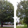 Photo #1: HARRIS TREE TRIMMING/TREE REMOVAL/ALL YARD SERVICES...
