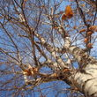 Ibarra Tree Service