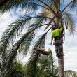 DIMAS TREE SERVICE