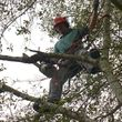 ACADIAN TREE SERVICE. AFFORDABLE&INSURED!