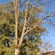 Photo #1: Quality Tree Service - takedowns, trimmings, topping, deadwooding