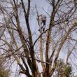 Photo #2: Quality Tree Service - takedowns, trimmings, topping, deadwooding