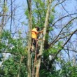 Powell & Sons. Tree Services