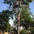 Photo #3: JARAMILLO TREE SERVICE