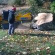 Stump grinding and Tree work. Lowest prices around!